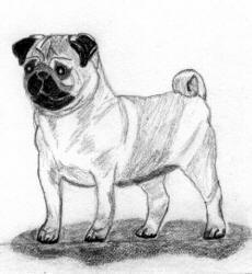 Pencil Pug Design Bw17