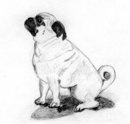 Pencil Pug Design Bw19