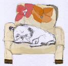 Bw20 - Pug Sleeping on Chair