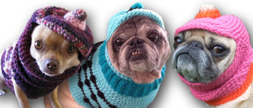 Visit my Etsy Shop to order your custom Dog Hat!